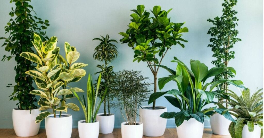 Blooming Plants That Are Easy to Maintai