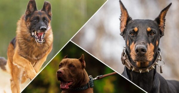 6 Smartest and Trainable Dog Breeds That Have Just Been Discovered