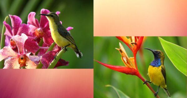 5 Easy-To-Execute Ideas to Attract Rare Birds to My Garden