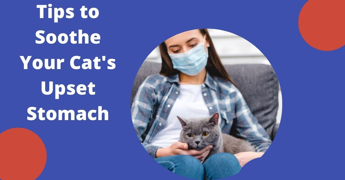 Soothe Your Cat's Upset Tummy