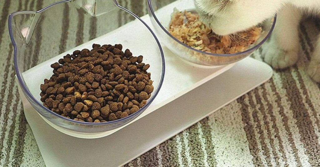 Do you have to switch cat food gradually?
