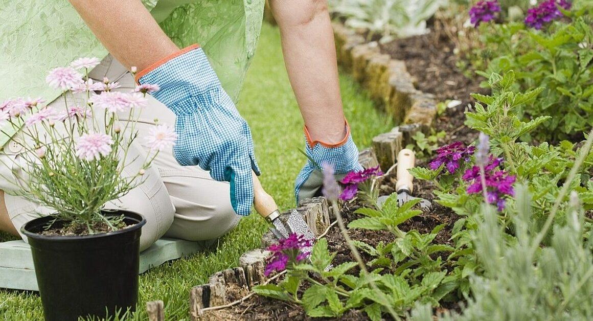 What Do I Need as a Beginner Gardener?