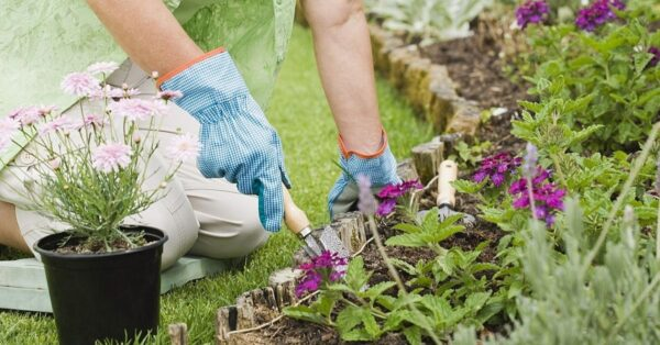 9 Gardening Tips And Tricks  Every Beginner Needs To Know